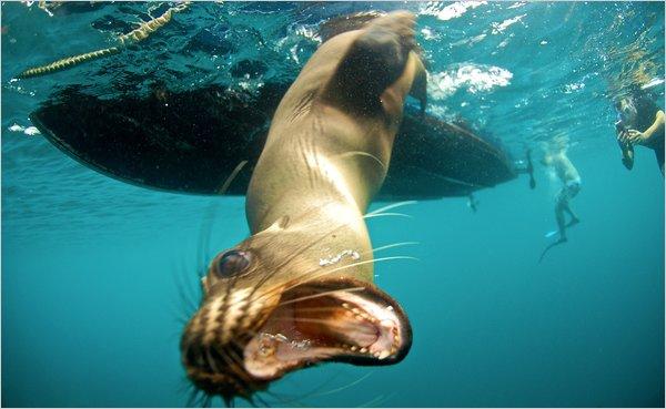 Galapogos-articleLarge-1