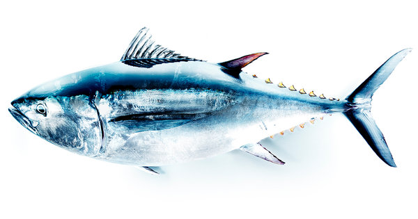 Tuna's End
